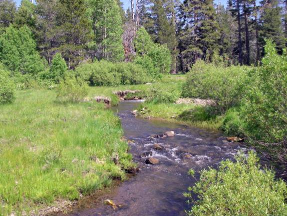 Flyanglers online readers cast for Fish and stream