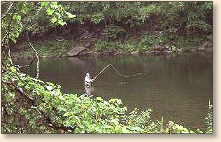 Fly angler 39 s online travel roscoe ny fish in 2003 for Roscoe ny fishing